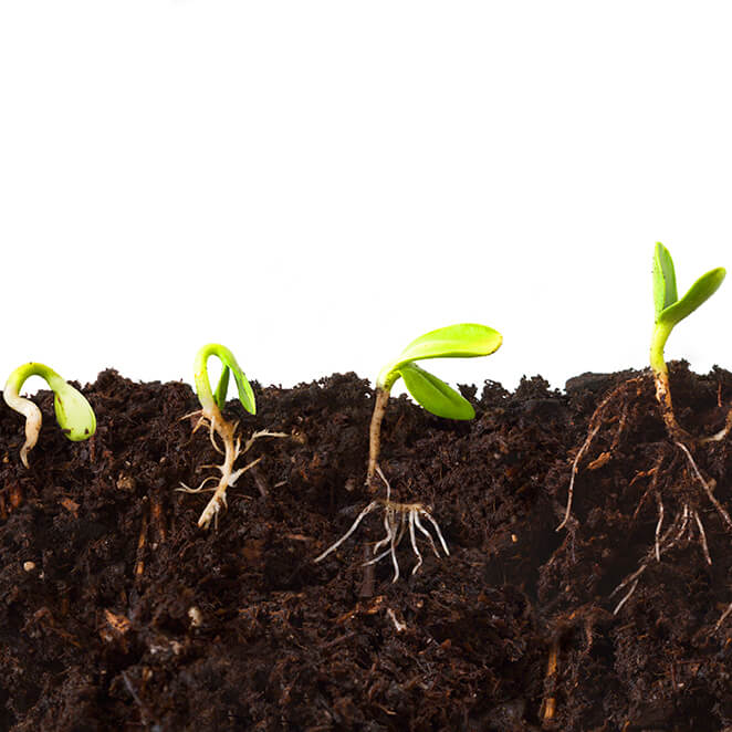 Healthy Plants Dig Healthy Soil